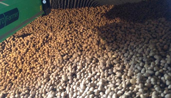 'Patates tüketin yoksa çiftçi batacak'