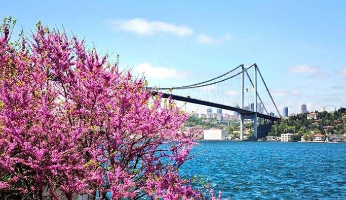 İstanbul'un süsü Erguvanlar açmaya başladı