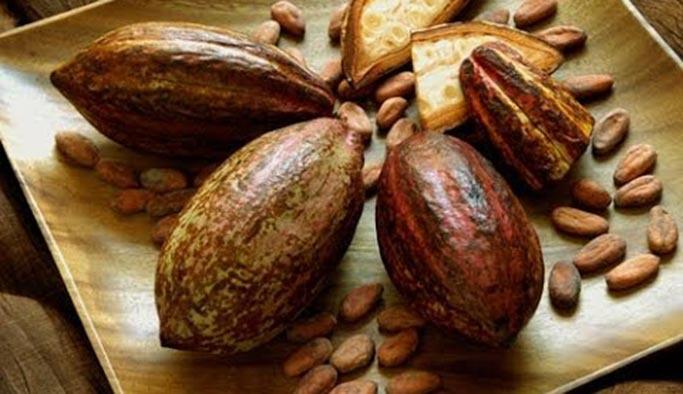 Kakao yağı nedir, ne işe yarar, faydaları, nerede bulunur, fiyatı ne kadardır?