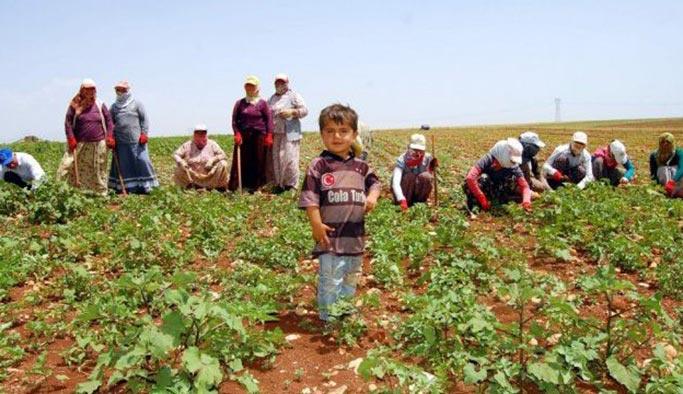 Mevsimlik tarım işçilerine yeni proje