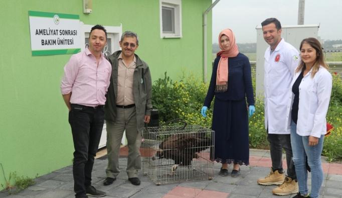 Bolu'da yaralı kara akbaba bulundu
