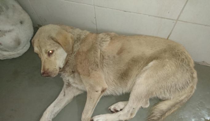 Av tüfeğiyle 2 köpeği öldürdü, 3 köpeği yaraladı