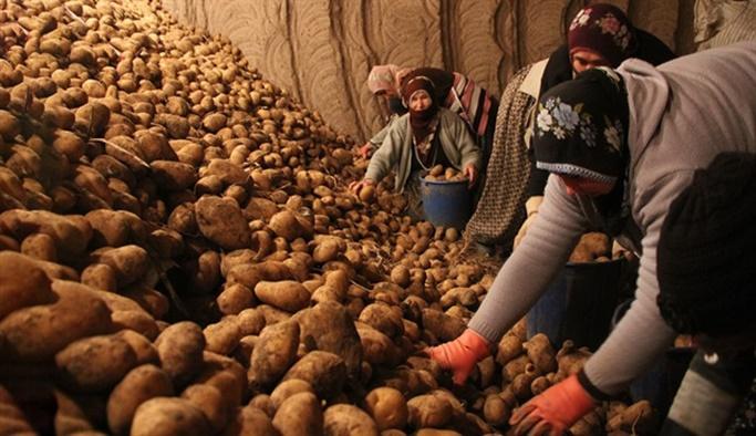 Patates ve soğana müdahale geliyor