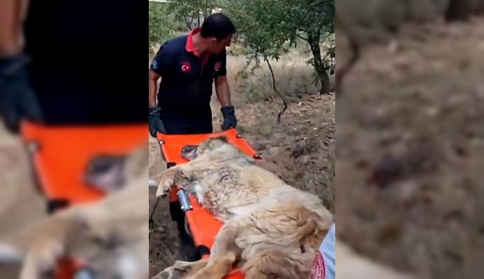 Açlık ve susuzluktan ölmek üzere olan köpek kurtarıldı