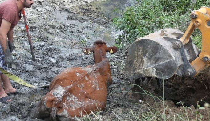 İtfaiyeden çamura batan ineğe yardım