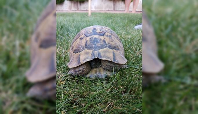 Boruda sıkışan kaplumbağaları itfaiye kurtardı