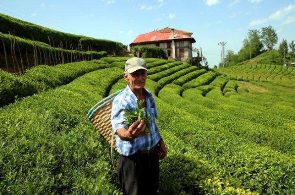 Beyaz çayın kilosu ne kadar?