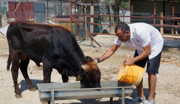 """Haluk Levent dana """"Ferdinand""""ı ziyaret etti"""