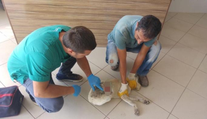 Polisler yaralı köpeği tedavi ettirdi