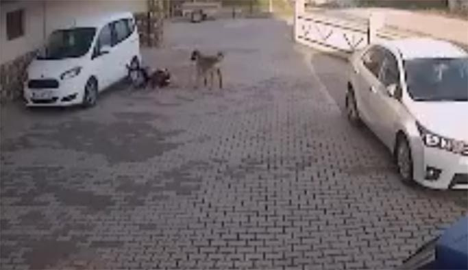 Önce çocuğunu sonra annesini dakikalarca yerde sürükledi