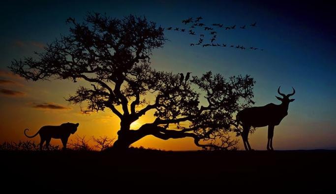Son 44 yılda hayvanların yüzde 60'ını yok ettik