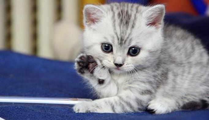 Rüyada kedi görmek ne demek yorumu nedir?