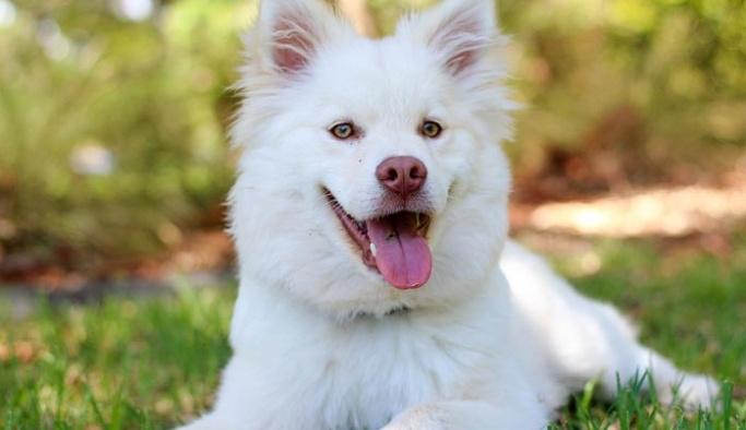 Rüyada Köpek Görmek Ne Anlama Gelir