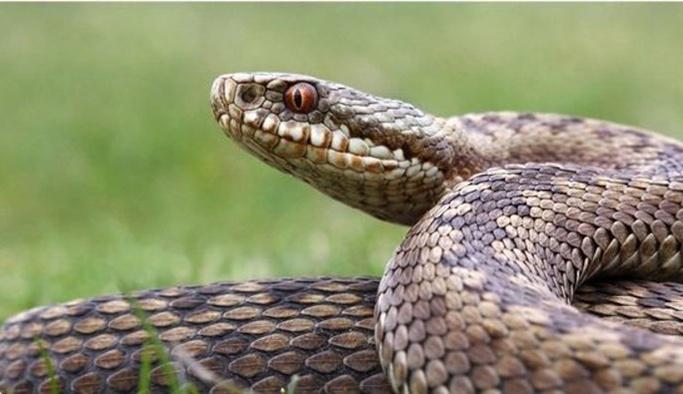 Rüyada yılan görmek - Alimlerin Yorumlarıyla