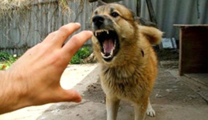 Artan köpek saldırıları ile ilgili korkutan uyarı