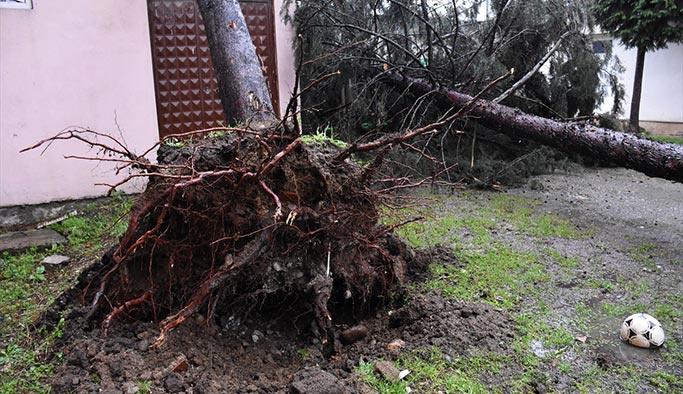 Fırtına ağaçları yerinden söktü