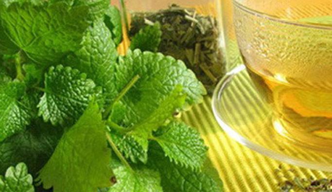 Melisa Çayının faydaları ya da yararları
