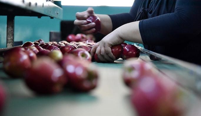 Erdoğan müjdesini vermişti: Elma tanzimi başlıyor