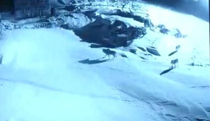 Köye inen aç kurtların saldırısı kamerada