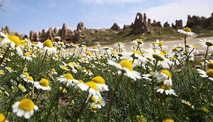 Kapadokya doğal çiçeklerle süslendi