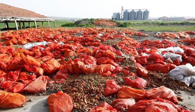 Soğan fırsatçılığının sonu: Hepsi çöpe gitti