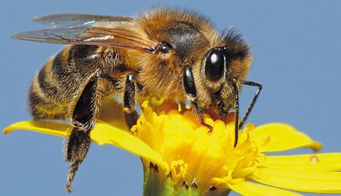 Arılar saldırdı: Bir ölü, 2 yaralı var