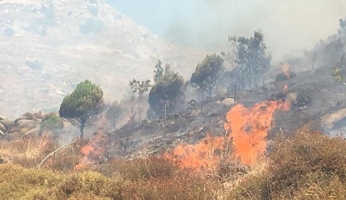 Marmara Adası ve Burgazada'da tehlikeli yangın