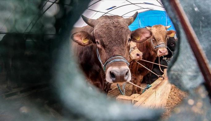 Türkiye dışarıdan hayvan alımını azalttı, satışını arttırdı