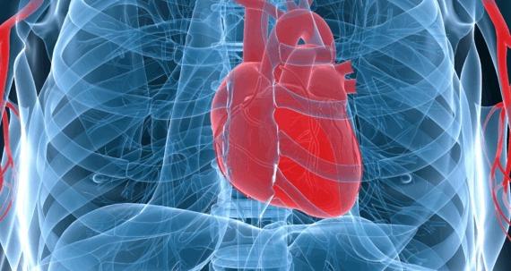 Kalp hastalıkları doğumdan başlıyor