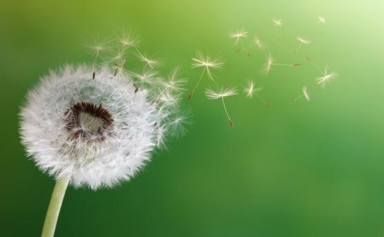 Polen alerjisinden kurtulmak mümkün