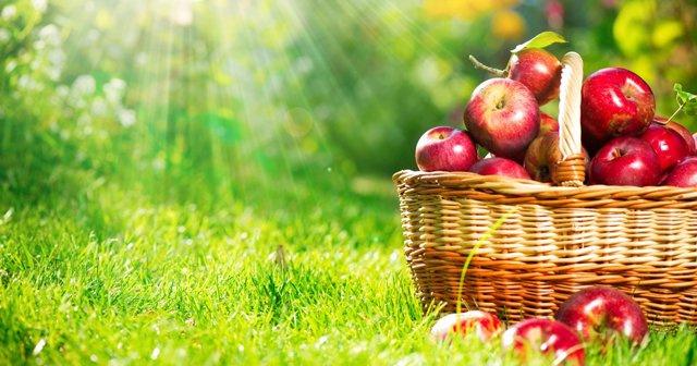 Sağlık deposu elma