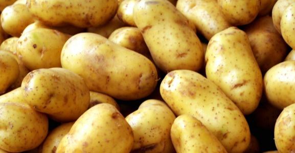 Patateste ihracat üreticiyi rahatlattı