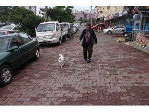 Kanser köpek, sahibinin sevgisi sayesinde 8 ayda sağlığına kavuştu
