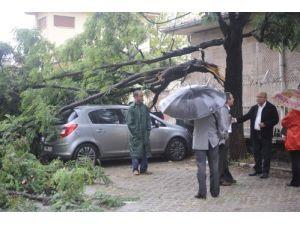 Sağanak yağmur ağaç dalını otomobillerin üzerine düşürdü