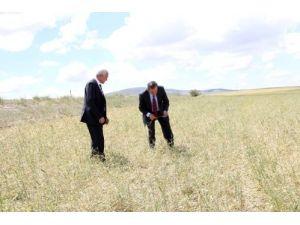 Vali Yazıcı: Yozgat'ta 410 bin dekar tarım alanı doludan zarar gördü