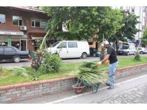 Alaplı'da süs ağaçları tahrip edildi