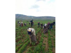 Mevsimlik tarım işçileri örgütlendi
