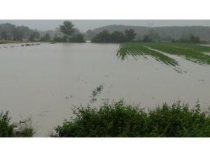 Sakarya'da dereler taştı, yüzlerce dönüm ekili alan sular altında kaldı (1)