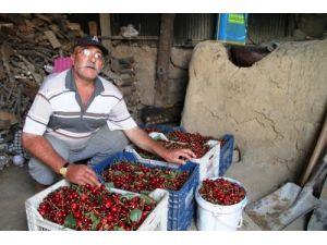 Mardin kirazı kilosu 7.5 TL'den satılıyor
