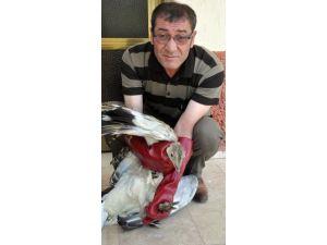 Yaralı bulunan toy kuşu tedavi altına alındı