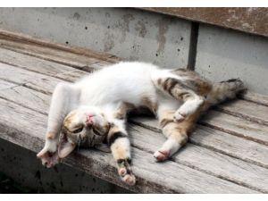 Kedinin güneş keyfi