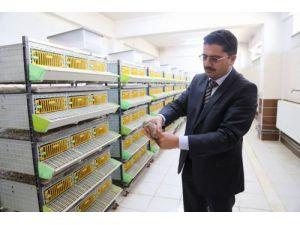 Yozgat'ta üretilen 10 bin keklik doğaya salınacak