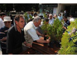 Çorlu Belediyesi bin fidan dağıttı