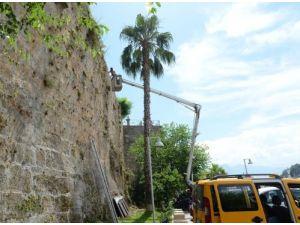Antalya'da tarihi surların temizlenmesi çalışmaları başladı