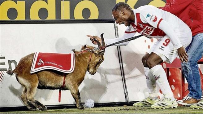 Ujah sevindi keçi üzüldü!