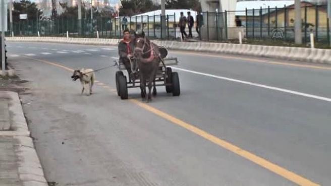 At Arabasına Bağlanıp Götürülen Köpeğin Zor Anları