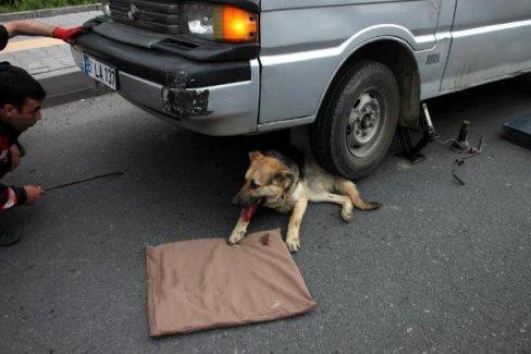 Köpek, lastiğe sıkıştı