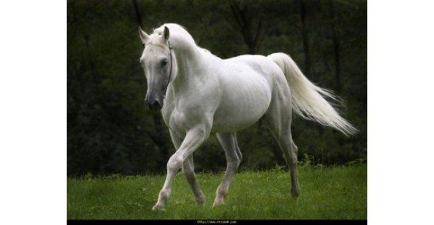 Rüyada at görmek ne anlama geliyor?