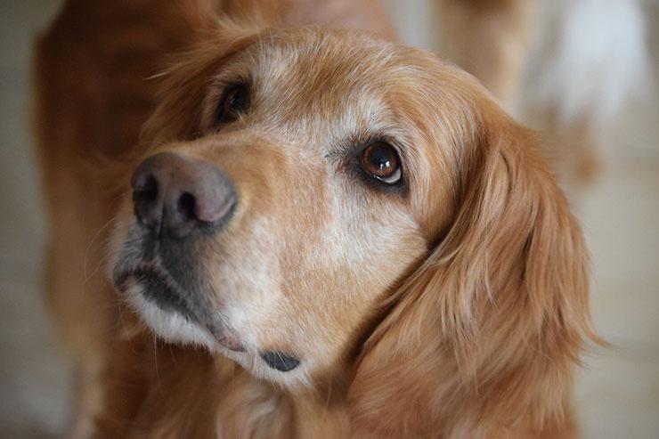Rüyada Köpek Görmek